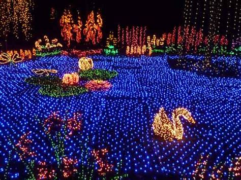 explore seattle about the garden d lights festival