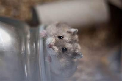 Hamster Fuetterung Verhalten Umschalten Menue Haltung