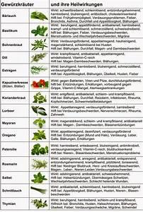 Wann Welches Gemüse Pflanzen Tabelle : nat rlich gesund berblick ber die wirkungsweisen der wichtigsten k chenkr uter gesundheit ~ Frokenaadalensverden.com Haus und Dekorationen
