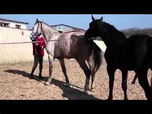 Horses, Videos and Watches on Pinterest