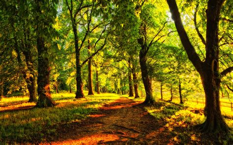 forest, Trees, Nature, Landscape, Tree Wallpapers HD ...