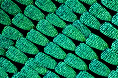 macro photographs  butterfly  moth wings  linden