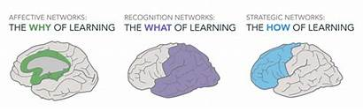 Udl Learning Universal Strategies Overview Toolkit Brain