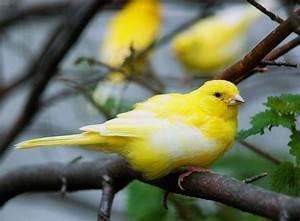 Außenvoliere Selber Bauen : vogelhaltung in einer au envoliere zooroyal ratgeber ~ Yasmunasinghe.com Haus und Dekorationen