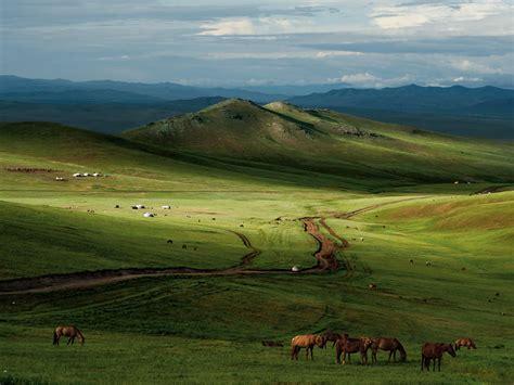 horses mongolian steppe