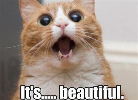 Cat Meme Images - digikitty