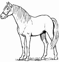 Standing Horse Drawing