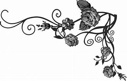 Vine Rose Clipart Flourish Floral Transparent Flourishes