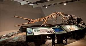 Big Bert « Royal Saskatchewan Museum