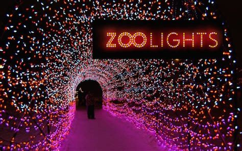 calgary zoo lights family event alumni of
