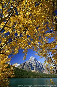 Banff National Park Alberta Canada Fall