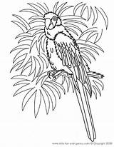 Coloring Pages Hawaiian Macaw Hawaii Printable Parrot Sheets Luau Flower Birds Print Adult Crafts Printables Adults Theme Party Flowers Bird sketch template