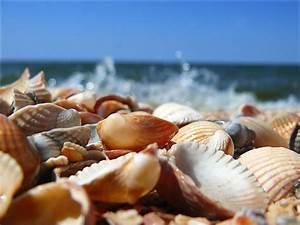 Shells, beach, beautiful, lovely, nature, ocean, sea, sea ...