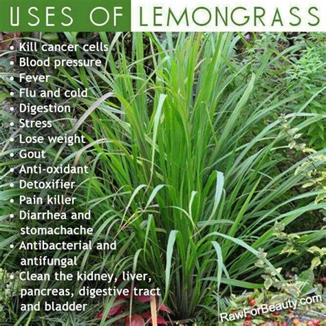 how to use lemongrass lemon grass benefits health pinterest
