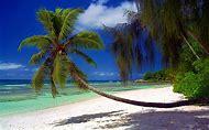 Tropical Beach Landscape Palm Trees