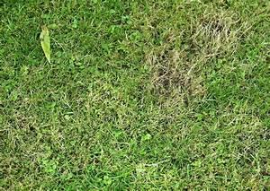 Moos Im Rasen Beseitigen : pin moos on pinterest ~ Lizthompson.info Haus und Dekorationen