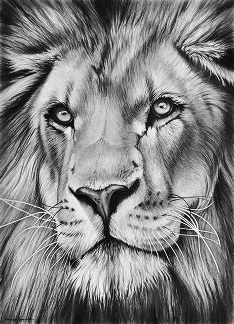 pin  charlesruibal  lion   lion drawing lion