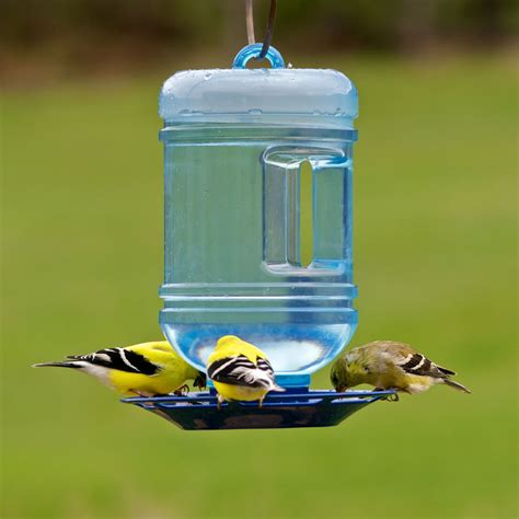 bird water feeder pet 174 water cooler bird waterer birdfeeders