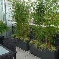 Bac Rectangulaire Pour Bambou : quelles plantes brise vue pour votre terrasse ou votre ~ Nature-et-papiers.com Idées de Décoration