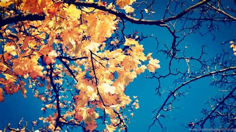Desktop High Quality Fall Backgrounds by Macbook Fall Backgrounds Wallpapers Desktop Background