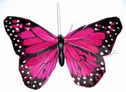 butterfly pink by kusc...