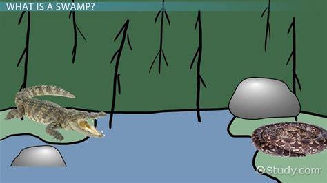 abiotic biotic factors  swamps video lesson