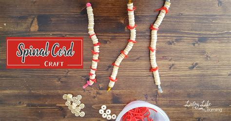 spinal cord craft