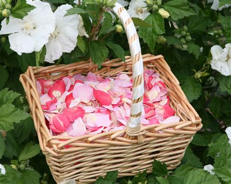 confetti blog rose petal wedding confetti