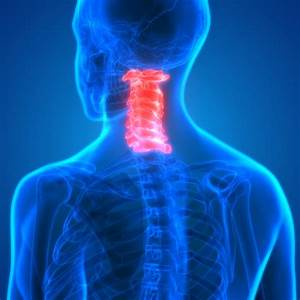 The Cervical Spine  Anatomy  Function  And Common