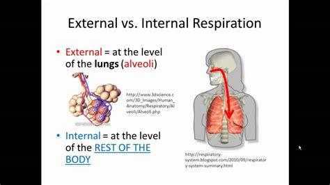 external  internal respiration gas exchange