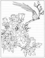 Peony Coloring Line Flowers Drawing Adult sketch template
