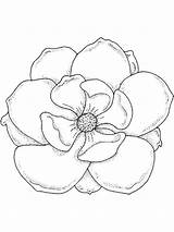 Magnolia Coloring Pages Drawing Template Flower Flowers Sketch Printable Draw Lily Getdrawings Colors Step Recommended sketch template