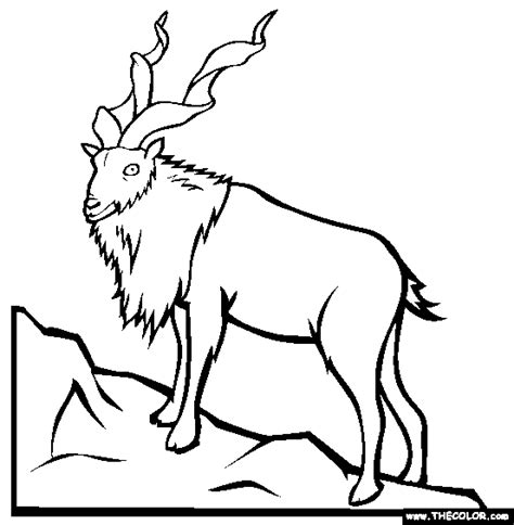 endangered animals  coloring pages page