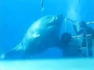 Largest Great White Shark Ever Recorded