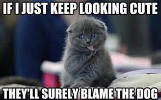 cat memes 10 cat memes 2015 cat pictures photos pics