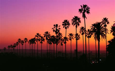 Los Angeles Sunset With Palm Trees Los angeles sunset