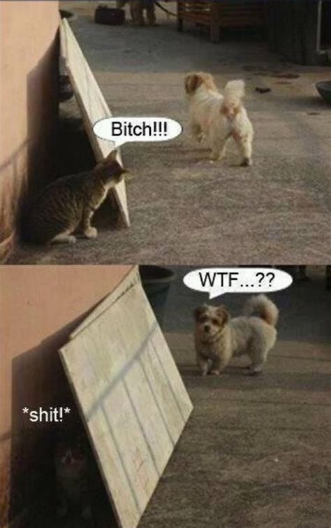Funny Cat Vs Dog  Jokes, Memes & Pictures