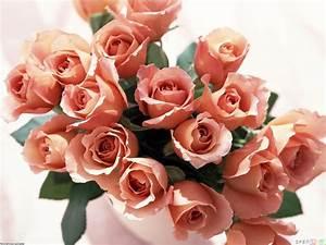 Beautiful bouquet of roses wallpaper #11681 - Open Walls