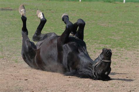 degenerative joint disease  horses symptoms