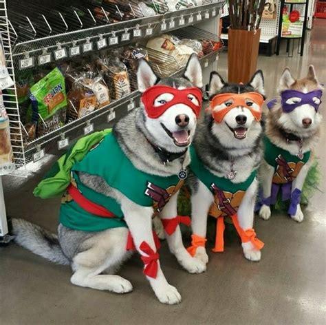 teenage mutant ninja turtles halloween costume  dogs pet halloween costumes puppy