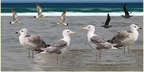 uccelli - Uccello Simile Al Gabbiano