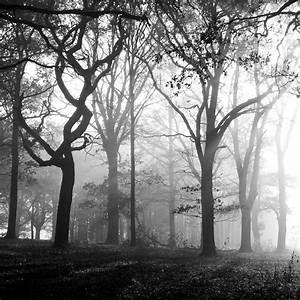 Herbst Schwarz Weiß : wald forum f r naturfotografen ~ Orissabook.com Haus und Dekorationen