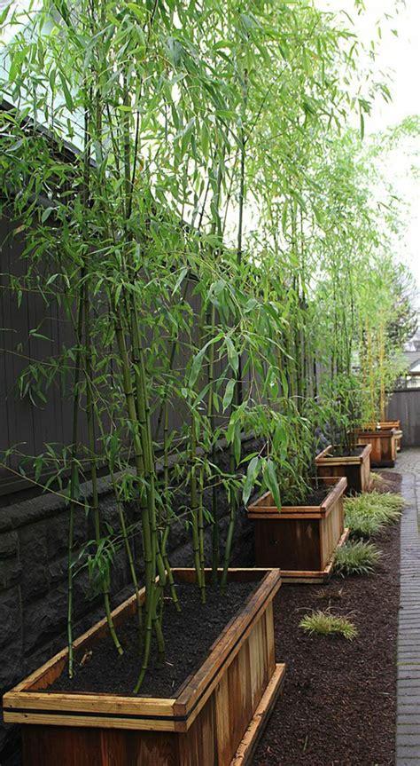 grosse kübelpflanzen sichtschutz 28 interessante sichtschutz ideen f 252 r garten archzine net