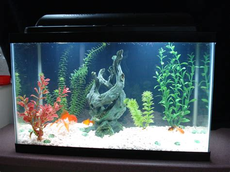 10 gallon fish tank guide guide to finding the best 10 gallon fish tank for you 2017 fish
