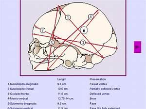 Fetal Skull Dimensions   Mnemonic