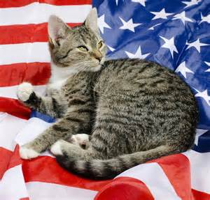 american cat what can your cat do for the usa we ask the american
