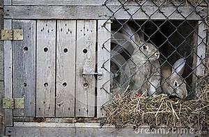 Lapins Dans Une Huche Photos Stock Image 26745363