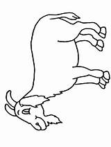 Goat Coloring Colouring Printable Sheet Sheets Activity Cliparts Mountain Cartoon Goat2 Clipart Printables Children Library Popular Coloringpages101 Coloringhome sketch template