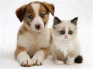 cat puppy animals puppies and kittens photos