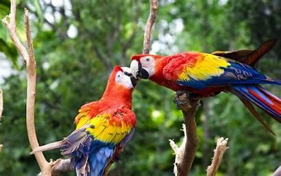 Bird Colorful Parrot Wallpapers Birds